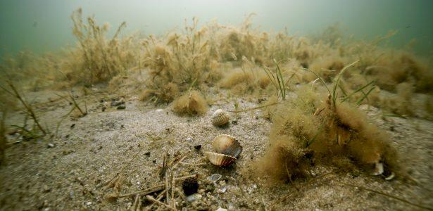 Ocean i życie w nim ukryte kształtują cechy Ziemi.