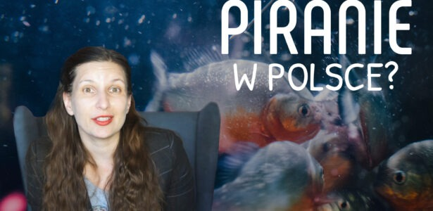 Odc. 110: Piranie w Polsce?